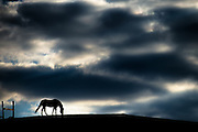 Lone horse and sky at the Patapsco Horse Farm in Oella, Maryland.