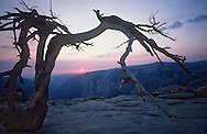 The lone Jeffrey Pine on Sentinel Dome at sunset, with a view of El Capitan in Yosemite National Park, California.  Photographer in 1990 by Jay Mather.  <br /> <br /> Please credit this way:  Special to xxxx/ Jay Mather<br /> <br /> jm