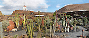 Panoramic view of the Cactus Garden, Lanzarote, Canary Islands, Spain, pictured on November 26, 2010 in the afternoon. Designed by local artist Cesar Manrique (1919-92), who restored the windmill and erected metal sculptures, the garden grows over 1000 varieties of cactus selected by botanist Estanislao Gonzales Ferrer. Lanzarote, the Easternmost of the Canary Islands, lies 125km East of the African coast, in the Atlantic Ocean. Like the other islands in this autonomous Spanish archipelago, Lanzarote is originally Volcanic. Picture by Manuel Cohen.
