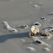 Polar Bear, mother and cub on the newly forming ice of Hudson Bay, manitoba.