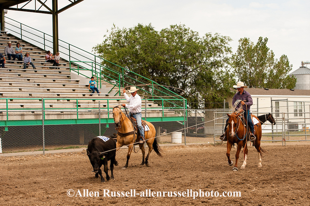 Will James Roundup, Ranch Rodeo, Three Man Cow Doctoring, Hardin, Montana, Ed Verhelst, KC Verhelst, MODEL RELEASED, PROPERTY RELEASED horses & riders