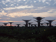 Singapore. Gardens by the Bay, Supertrees at sunrise.