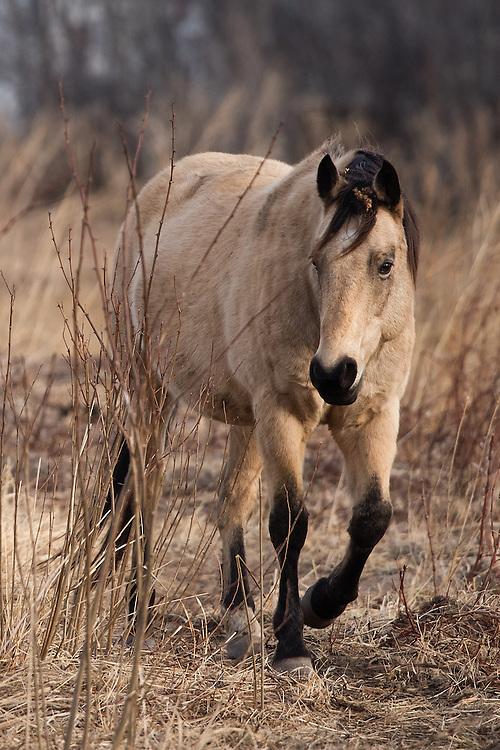 Horse, Hygiene, Colorado