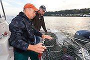 WA11824-00...WASHINGTON - Phil Russell and Jim Johansen prepare the shrimp pots for an early morning shrimp opening on the Puget Sound. (MR# J5 - R8)