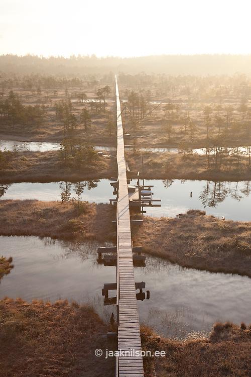 Wooden Boardwalk in Männikjärve Bog, Endla Nature Reseve, Jõgeva County, Estonia