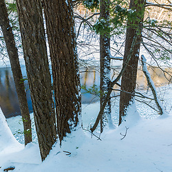 Hemlock trees on the bank of the Ipswich River at the Julia Bird Reservation in Ipswich, Massachusetts. Winter.