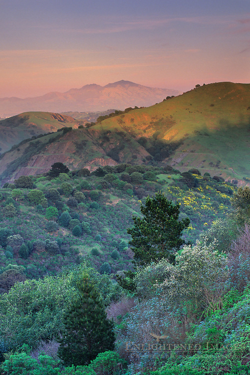 Sunset light on Mt. Diablo, from the hills above Orinda, Contra Costa County, CALIFORNIA