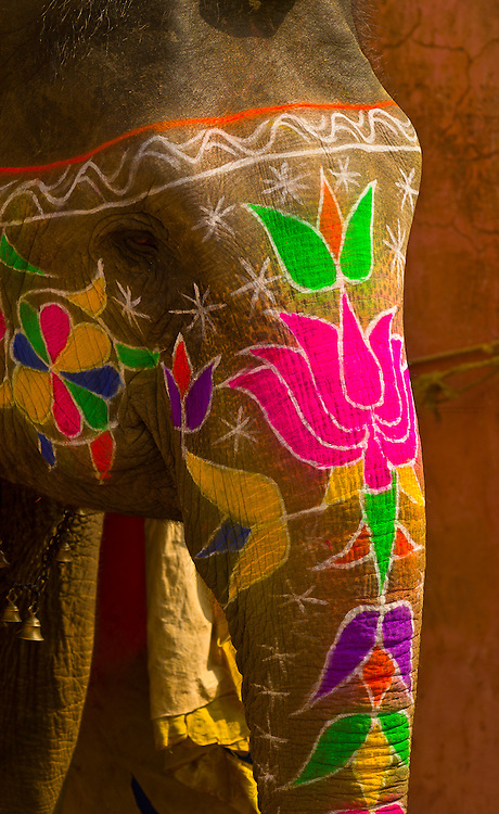 Painted elephants, Amber Fort, Amber (near Jaipur), Rajasthan, India