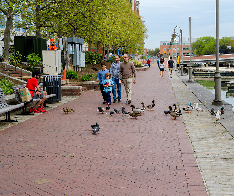 Baltimore, MD, USA --April 13, 2019-- People walk along on the promenade; a man dressed in a red shirt and sneakers feeds the pigeons.