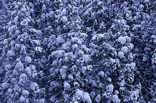 Japan, Forest near Nagano. Winter.