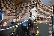 Afspuiten<br /> Veiling Dutch Sport Horse Sale 2013<br /> © DigiShots
