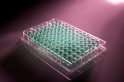 PCR DNA sequencing tray. 96 well tray.