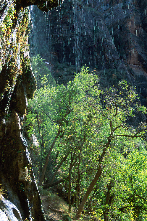 Weeping Rock Zion ,Canyon Zion National Park,Utah,USA