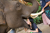 Thailand The Elephant Whisperer