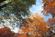 Trees with different colors of foliage.