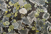 Lichen polygons. Boom Lake Trail, Banff National Park, Alberta, Canada.