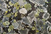 Lichen polygons. Boom Lake Trail, Banff National Park, Alberta, Canada.