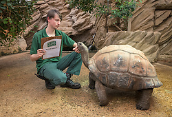 © Licensed to London News Pictures. 27/12/2019. Bristol, UK. The annual animal census is carried out at Bristol Zoo. Picture of zoo keeper Adam Davis with Aldabran Giant Tortoises. Photo credit: Simon Chapman/LNP.
