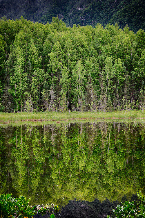 Reflection of a lake with trees in Alaska