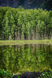 Reflection on a lake with trees in Alaska
