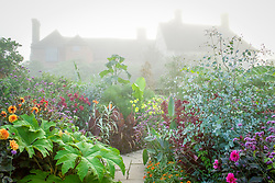 Misty morning in the exotic garden at Great Dixter. Planting includes dahlias, Arundo donax var. versicolor syn. 'Variegata', Tetrapanax papyrifer, Paulownia tomentosa and Eucalyptus gunnii. House beyond.