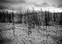 Gammelt gress.<br /> Foto: Svein Ove Ekornesvåg