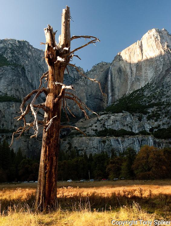 """Yosemite Falls 1"" - Yosemite Falls plunges to the Valley floor"