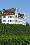 Schloss Hersberg, Weinberg, Immenstaad, Bodensee, Baden-Württemberg, Deutschland