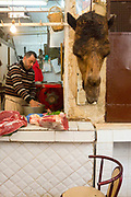 FEZ, MOROCCO - 05th MARCH 2016 - Camel meat butchers stall in the old Fez Medina, Middle Atlas Mountains, Morocco.