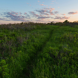 A trail in the grass at Seapoint Beach in Kittery, Maine.