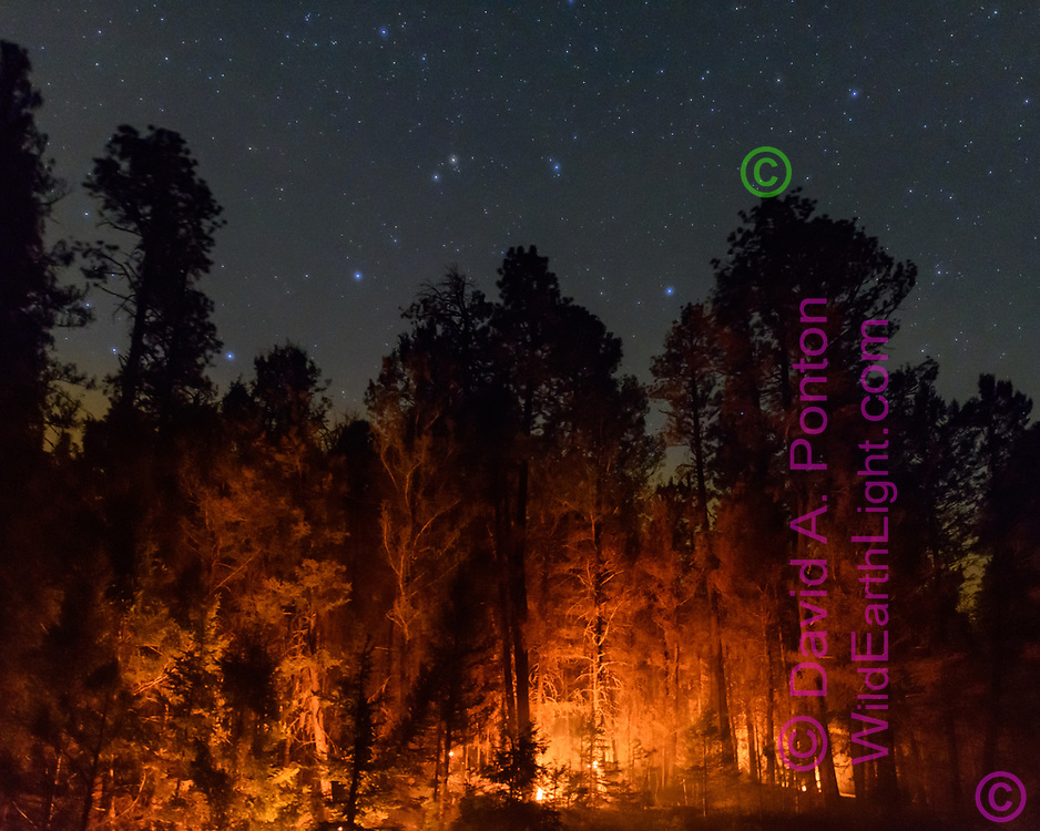 Small ground fires light up the lower level of unburned ponderosa pine forest in the Cajete Fire under the starry night sky, © 2017 David A. Ponton