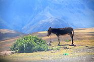 peru :: sacred valley (2012)