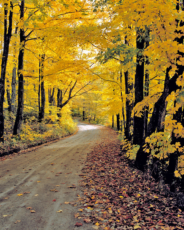 Back road with fall foliage welcomes travelers in Groton, Vermont.