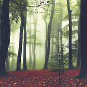 Forest clearing on a hazy fall morning<br /> --&gt; Redbubble prints: https://rdbl.co/2NNDifj