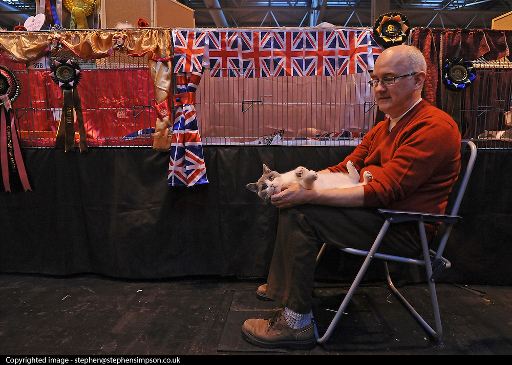 © Licensed to London News Pictures. 19/11/2011, Birmingham, UK.  Kevin Bruce plays with Bertie the six month old British Shorthair. Bertie has the stage name Willow Wood Albion. The Supreme Cat Show held today, 19 November in the National Exhibition Centre, Birmingham.  The event is a highlight in the cat show calendar and is regarded as the feline equivalent of Crufts. Photo credit : Stephen Simpson/LNP