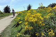 Nederland, Millingen, 24-7-2012Fietser fietst over een zandpad door de Millingerwaard. Het is een warme zomerse dag.De kant van het pad staat vol bloeiende gele bloemen. Dit gebied in de ooijpolder is zeer in trek als recreatie en natuurgebied. Trekt in de zomer veel toeristen,Foto: Flip Franssen/Hollandse Hoogte