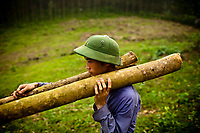 A young man carries felled tree trunks off to help clear land for new crops in northern Vietnam.