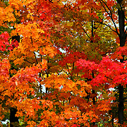 &quot;Take a Peak&quot;<br />