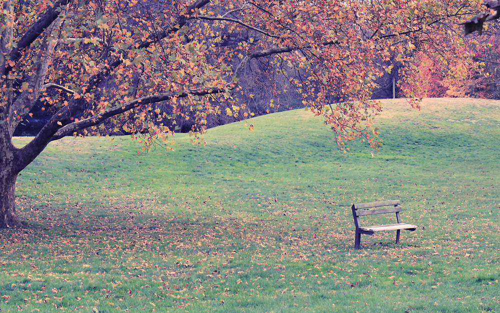 Photo of fall leaves and lone park bench. Hawthorne, NJ