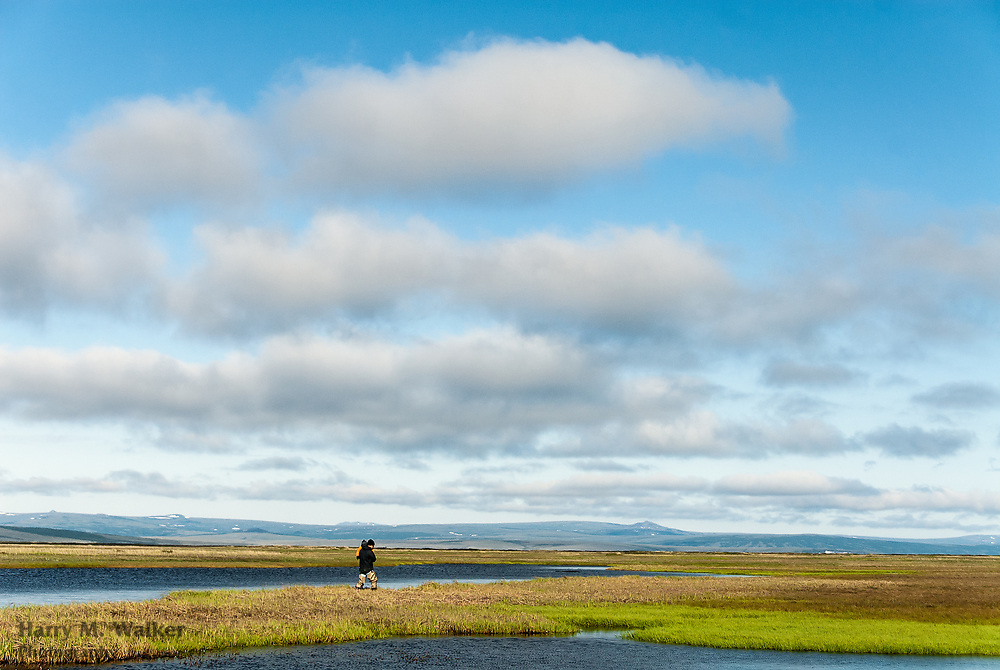 Father with toddler son walks among small ponds next to lower Fish River near White Mountain in northwest Alaska; cumulus humilis fractus clouds; model released