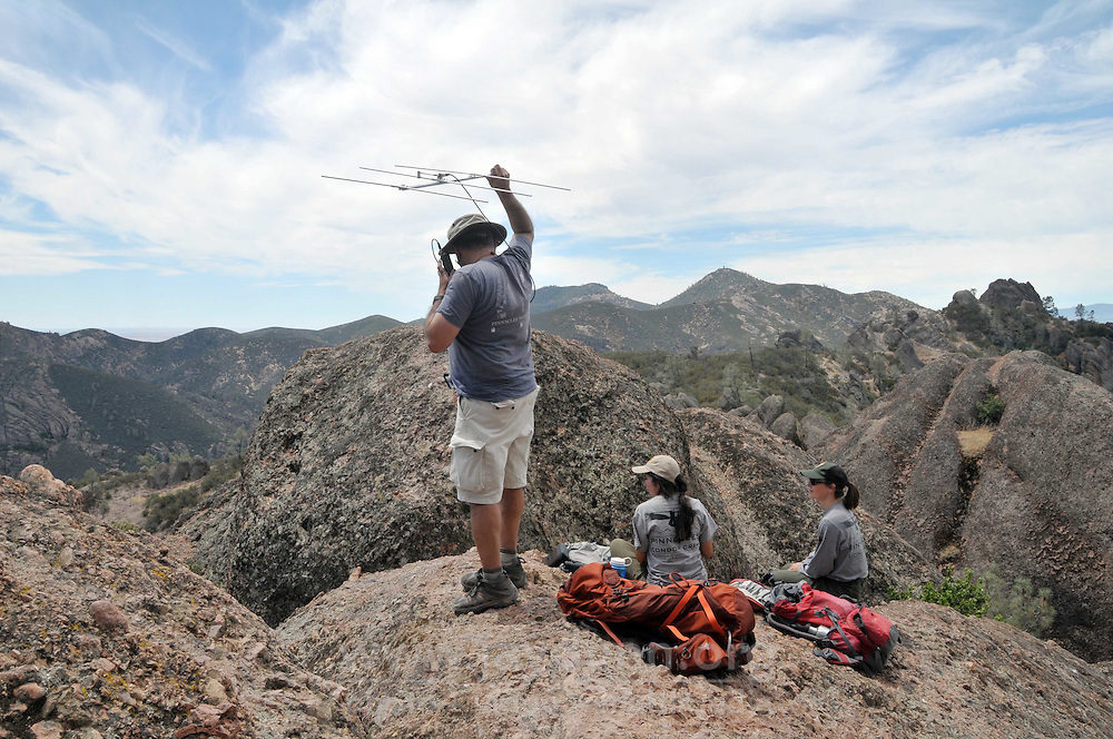 Volunteers and park staff track tagged California condors from a high vantage point at Pinnacle National Park near Salinas.