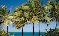 Just palms with blue sea background