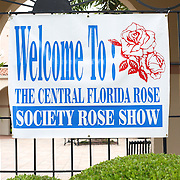 Rose Show, Winter Park, Florida