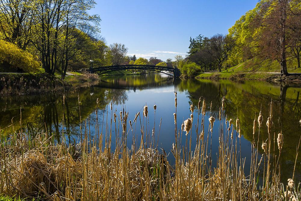 Spring, Washington Park, Albany NY