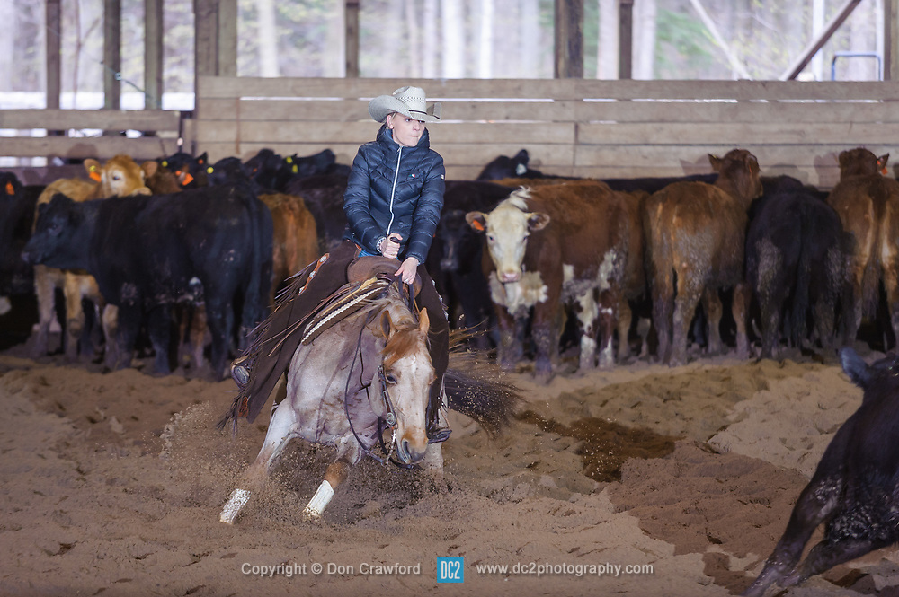 April 30 2017 - Minshall Farm Cutting 2, held at Minshall Farms, Hillsburgh Ontario. The event was put on by the Ontario Cutting Horse Association. Riding in the Non-Pro Class is Amanda Law on Sweet and Lo owned by the rider.