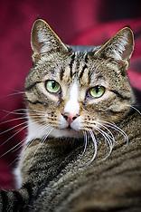 Catland Portraits