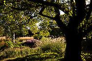 An autumn border of grasses, sedum and asters at Kew Gardens, London, UK