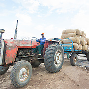 CAPTION: A tractor pulls a trailer of sacks of raw cotton for weighing and then into the ginnery for processing. LOCATION: Great Lakes Ginnery, Mgabu, Chikwawa, Malawi. INDIVIDUAL(S) PHOTOGRAPHED: Thenford Rodgers.