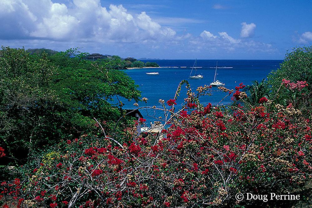 yacht harbor, Saint Vincent,  St. Vincent & the Grenadines, West Indies ( Eastern Caribbean Sea )