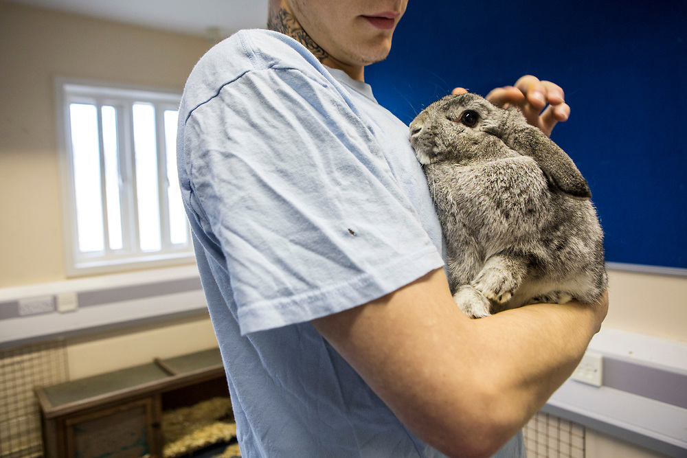 A prisoner stands with a rabbit in his arms. Pet therapy, used as a natural holistic therapy for prisoners. Beaufort House, a skill development unit for enhanced prisoners. Part of HMP/YOI Portland, a resettlement prison with a capacity for 530 prisoners.Dorset, United Kingdom.